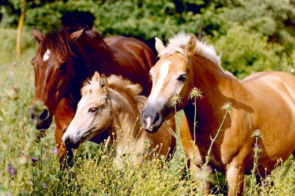 01_foto-cavalli-in-azienda